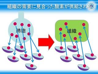 13組織の需要に見合った酸素が供給される.jpg