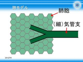 1肺の模式図.JPG