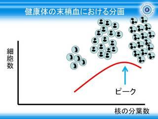 5健康体の末梢血における好中球の分画グラフ.JPG