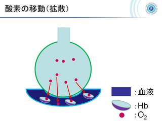 7酸素の移動.jpg