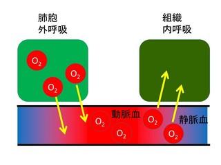 図スライド2.jpg