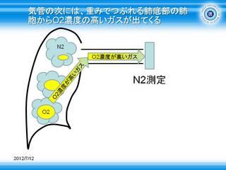8気管の次には、重みでつぶれる肺底部の肺胞からO2濃度の高いガスが出てくる.JPG